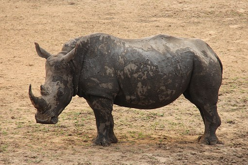 Rhino, Exciting, Adventure, Safaris, Scenic, Beautiful