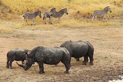 Rhino, Zebra, Exciting, Adventure, Safaris, Scenic