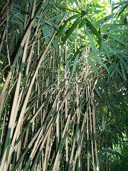 Bamboo, Forest, Nature, Leaves, Asia, Green