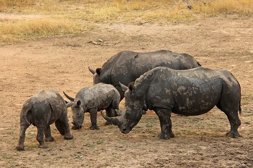 Rhinos, Baby Rhino, Exciting, Adventure, Safaris