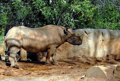 Rhino, Wildlife, Animal, Reserve, Rhinoceros, Mammal