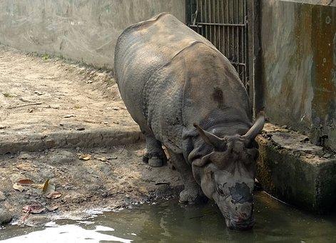 Rhinoceros, One-horned, Animal, Wild, Wildlife