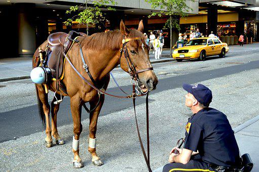 Animal, Horse, Brown, Street Style, Police, City, Two