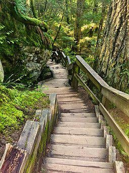 Trees, Nature, Stairs, Zen, Energy, Reiki, Tranquil