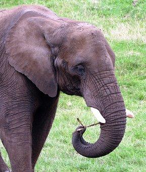 Animals, Elephant, Nature, Wild, Zoo, Zoo Animals