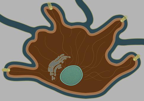 Connectedbio, Melanocyte, Brown Cell, Cell, Dark Cell