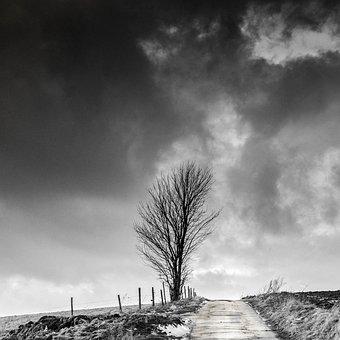 Tree, Clouds, Landscape, Rural, Loneliness, Eifel