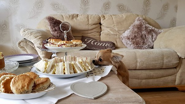 Chihuahua, Cheeky, Afternoon, Tea, Scones, Sandwiches