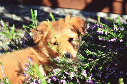 Dog, Cute, Puppy, Flowers