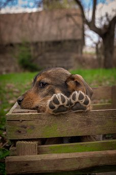 Puppy, Dog, Pet, Animal, Cute, Adorable, Canine, Doggy