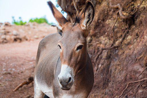 Donkey, Brown, Mountain Road, Sand, Trail, Alone