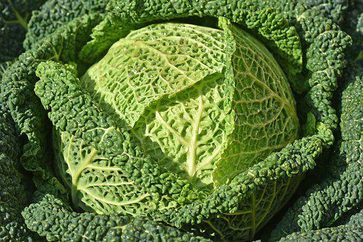 Cabbage, Green, Vegetables, Sano, Food, Cool