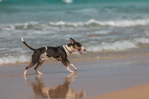 Dog, Happy, Cheerful, Holiday, Holidays, Beach, Sea