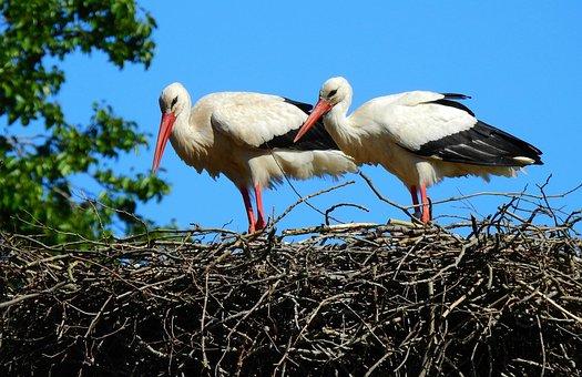 Stork, Wading Bird, Animal, Nest, Pair, Springtime