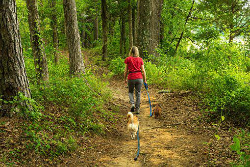 Dog Walker, Woman Walking, Walking Dogs, Forest Trail