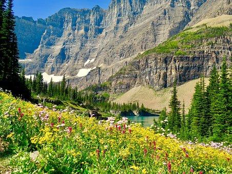 Iceberg Lake, Glacier National Park, Wild Flowers