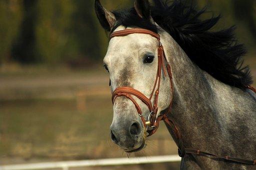 Horse, Running, Mane, Black, In Apples, Grey, Portrait