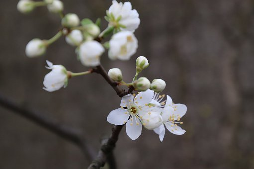 Flower, Spring, Nature, Bloom, Plant, Blossom, Garden