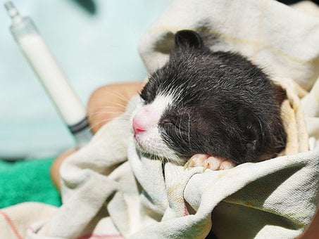 Young Cats, Kittens, Orphan Cats, Feed, Kitten, Cat
