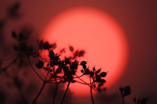 Sun, Sunset, Red, Flower, Back-light, Sunrise, Nature