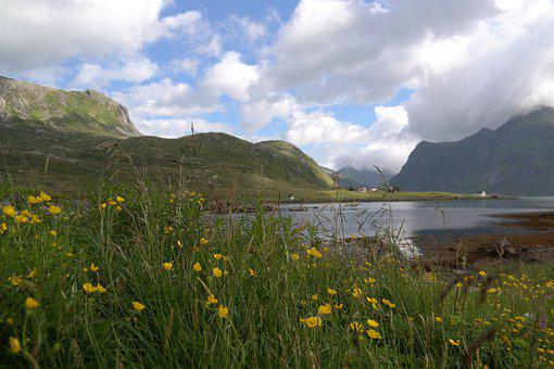 Mountains, Sea, Flowers, Landscape, Yellow, Fjord, Sky
