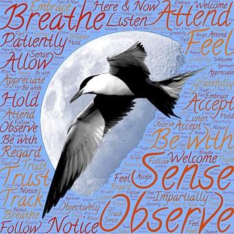 Meditation, Sensing, Observing, Being