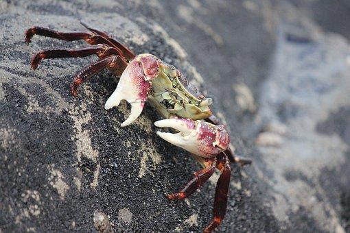 Crab, Seafood, Lobster, Shellfish
