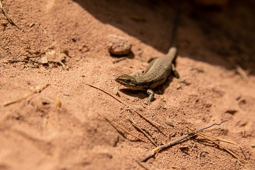 Lizard, Animal, Reptile, Nature, Animal World, Exotic