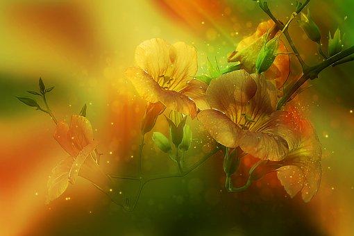 Denaturation, Flower, Campsis, Nature