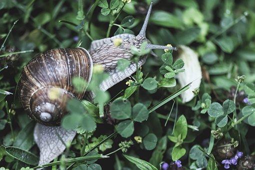 Snail, Animal, House, Crawl, Shell