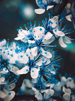 Flowers, Nature, Flower, Spring, Pink, Summer, Bird