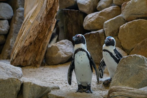 Penguin, Zoo, Animal, Nature