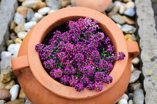 Flower Pot, Stones, Potted Plant, Summer, Garden, Pots