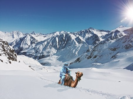 Camel, Deep Snow, Reiter, Mountains, Winter, Snow