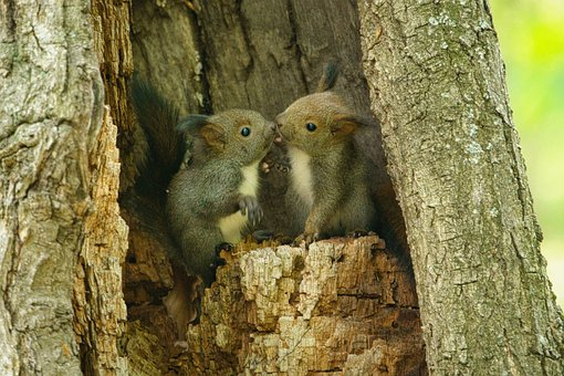 Squirrel, Kid, Child, Baby, Kiss, Animal, Wildlife
