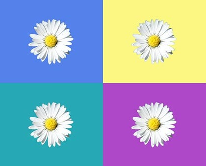 Daisy, Tile, Isolated, Graphically