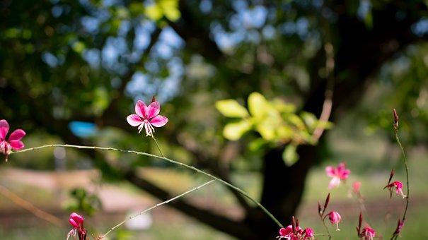 Flower, Pink, Leaves, Tree, Red, Green, Fresh