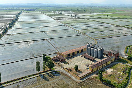 Rice, Rice Field, Cascina, Nature, Earth
