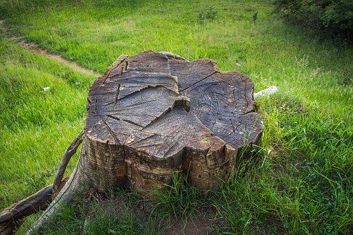 Stump, Deforestation, Tree, Nature, Wood, Tree Trunks
