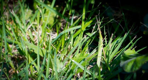 Grasshopper, Leaves, Green, Shades, Earth, Dirt
