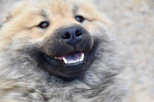 Dog, Black Nose Dog, Black Truffle, Dog Nose, Snout