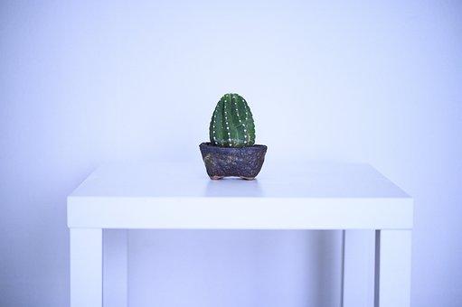 Cactus, Plant, Background, Simple, Interior, Design
