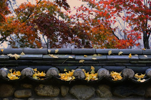 Qingdao, Unmunsa, Autumn, Autumn Leaves