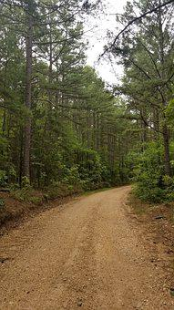 Gravel Road, Pine Trees, Forest, Forest Road