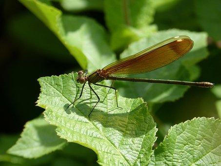 Dragonfly, Damselfly, Leaf, Blackberry