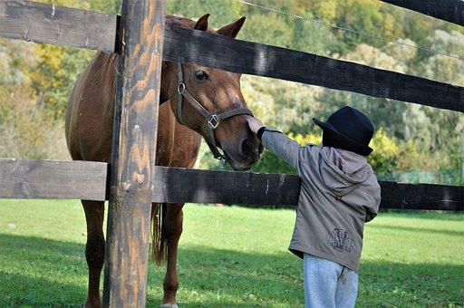 Horse, Pony, Child, Mane, Nature, Foal, Pasture