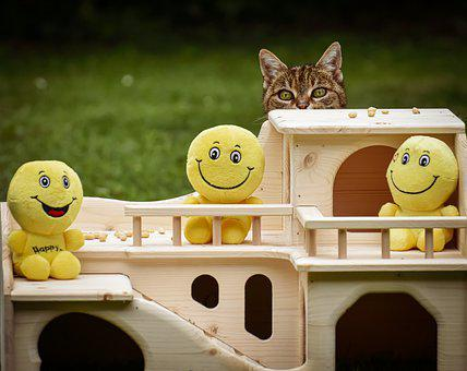 Woodhouse, Cat, Curious, Smilies