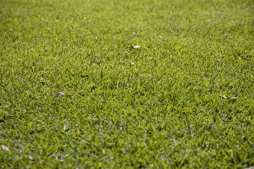 Grass, Nature, Chan, Landscape, Summer, Agriculture