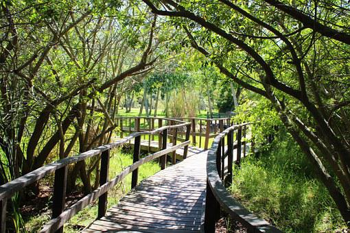Forest Path, Bridge, Path, Nature, Trees, Away, Rest