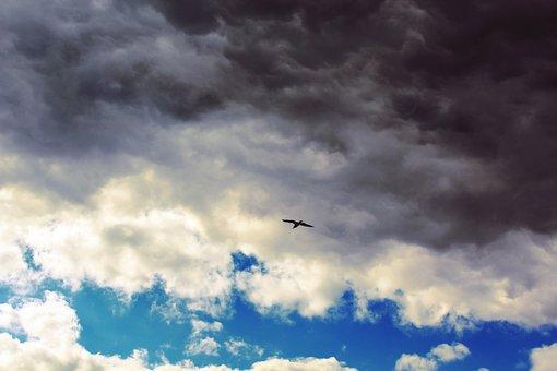 Clouds, Sky, Blue, Seagull, Fly, Rain Cloud, Grey, Dark